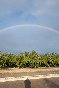 Hive rainbow 9229